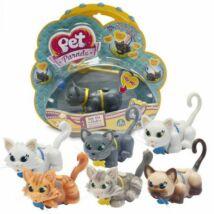 Pet parade cica többféle