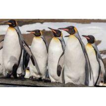 Discovery Super 3D Pingvines Puzzle